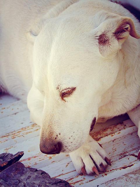 Cachorro vomitando amarelo o que fazer