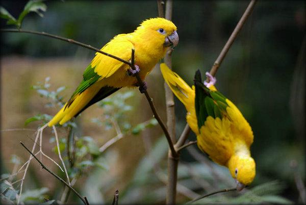 Animais em extinção da região Norte do Brasil