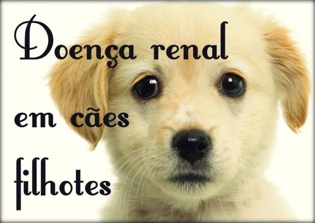 Problemas renais em cães: causas, sintomas e tratamento.