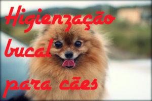 Dicas para higienização bucal de cachorros