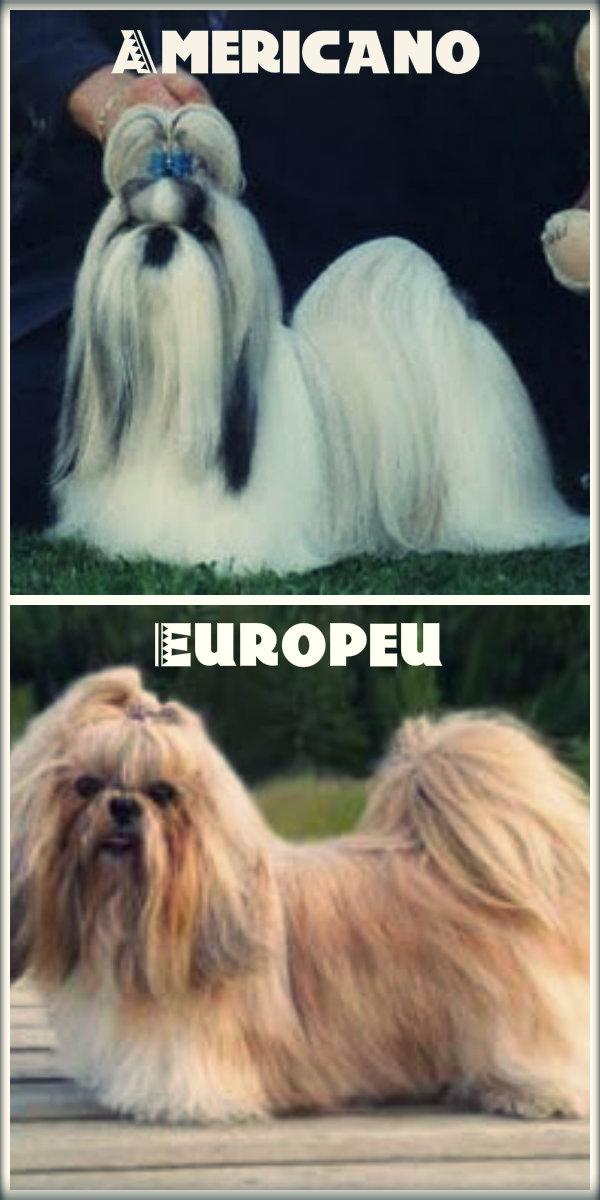 Diferença entre o shih tzu americano e o europeu.