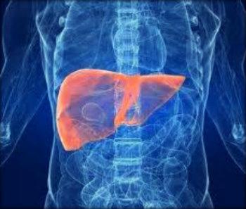 Problemas no fígado: causas, sintomas e tratamento.
