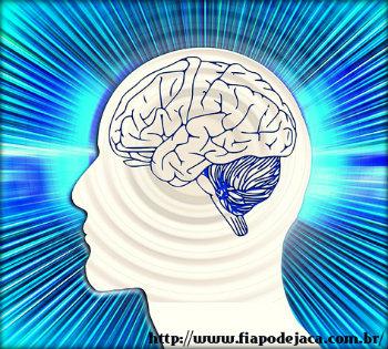 A importância do cérebro no corpo humano