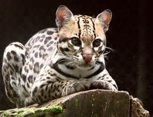 Animais em extinção no Cerrado