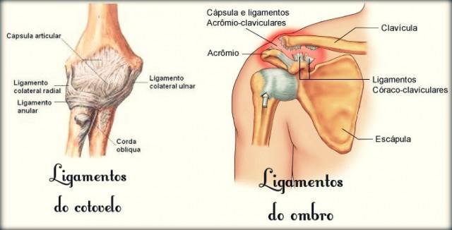 Ligamentos do braço.
