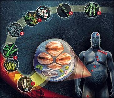 Metabolismo lipídico: significado e explicação.
