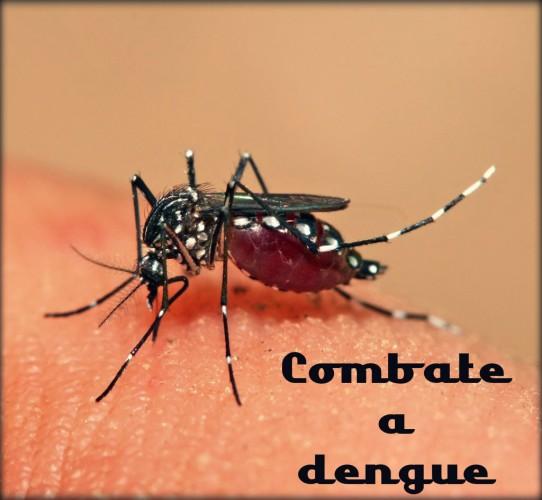 Hábitos e atitudes para acabar com o mosquito da dengue