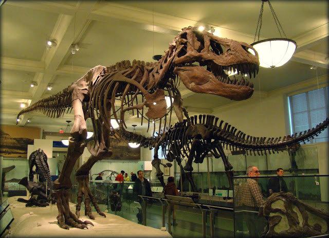 Museu Americano de História Natural. (Foto: Divulgação)