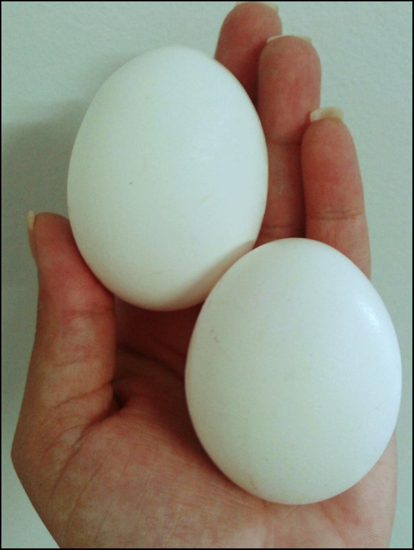 Receita de ovo poche