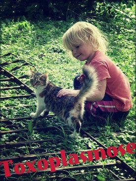 Toxoplasmose: causas, sintomas, cura, tratamento, prevenção e complicações