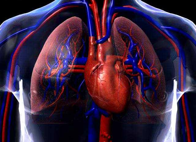 O sistema circulatório é responsável pela bombeação de sangue ao nosso corpo!